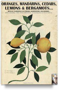 Oranges, mandarins, cedars, lemons & bergamots…