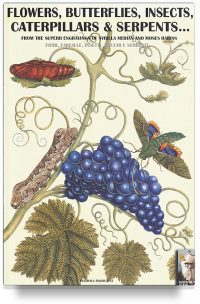 Flowers, butterflies, insects, caterpillars & serpents… From Sybilla Merian & Moses Hariss XVII-XVIII Centuries engravings